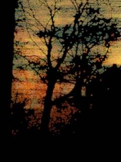 Kai W. Reinschmidt,Bäume