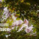 Feldversuch bei der Wilden Möhre – Trailer
